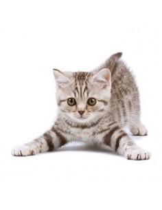 Mourované kotě - nalepovací...