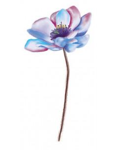 Sasanka - květinové dočasné...