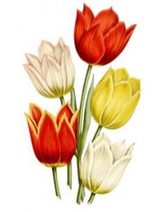 Tulipány - nalepovací tetování
