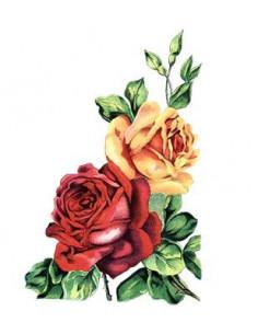 Červená a žlutá růže -...