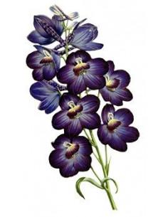 Fialová orchidej -...