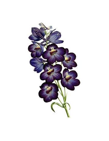 Fialová orchidej - nalepovací tetování